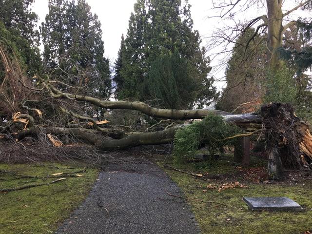 Ein umgeknickter Baum in Aarau