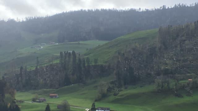 Eine Waldparzelle mit mehreren umgestürzten Bäumen.