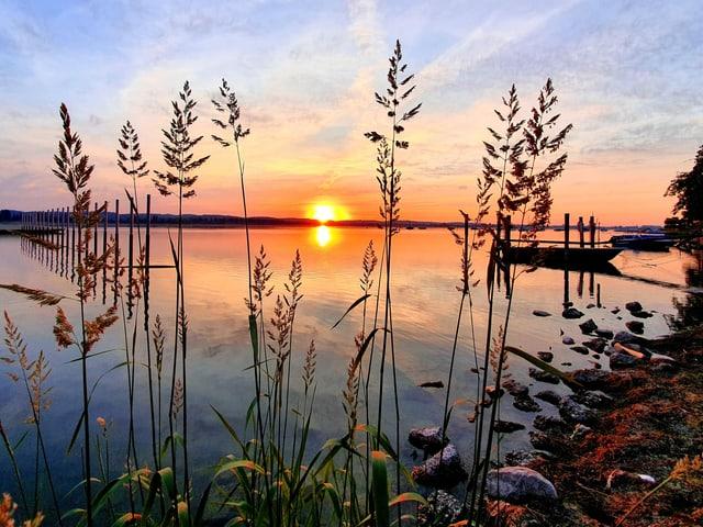 Ufer mit Schilf, die Sonne geht über glattem See auf und der Himmel ist farbig von gelb bis blau.