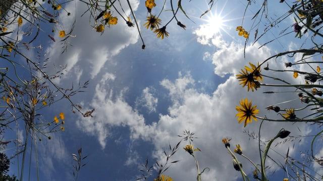 Blick von einer Blumenwiese zum Himmel. Dieser ist teils blau, teils bewölkt.