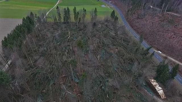 Luftaufnahme von einem Waldstück mit umgestürzten Bäumen.
