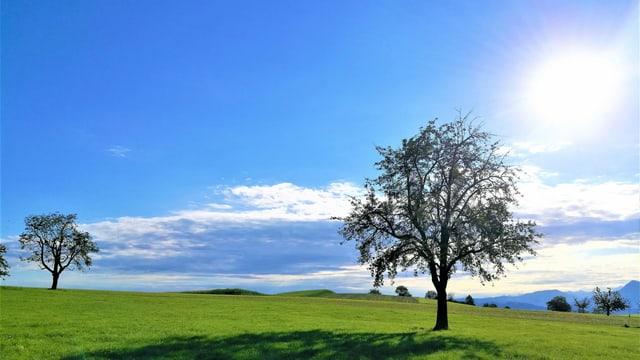 Sonne am Himmel. Baum auf Wiese.