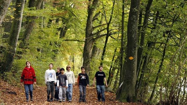 Gruppe von Spaziergängern auf Waldweg mit Bäumen rundrum