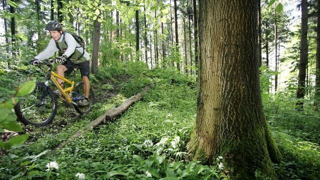 Ein Mountainbiker fährt in einem Wald. Im Vordergrund ist ein grosser Baumstamm zu sehen.