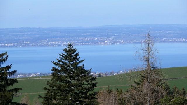 Blick auf den Bodensee von Hügel aus.