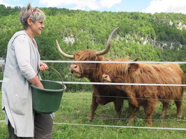 Frau füttert Schottische Hochlandrinder.