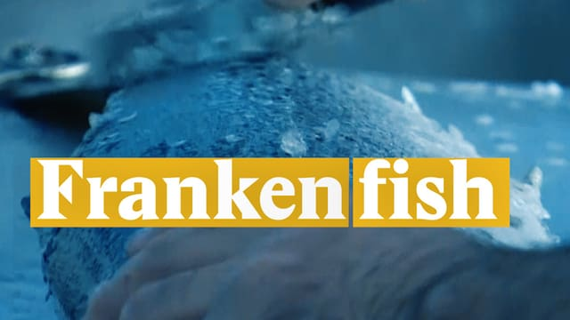 Laschar ir video «Frankenfish»