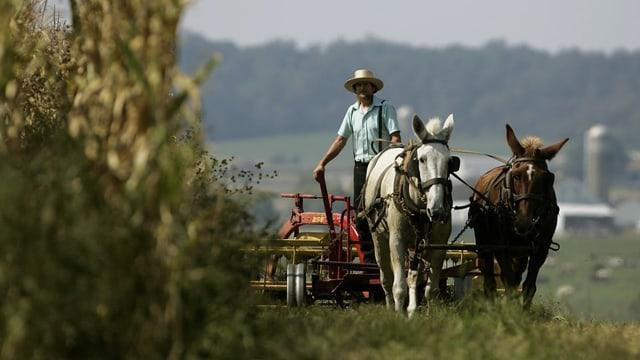 ein Mann pflügt ein Feld in einem Pferdewagen