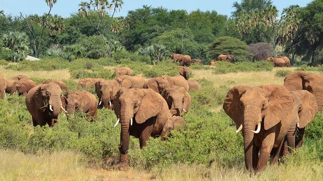 Die grosse Wanderung – Der Pfad der Elefanten (1/3)