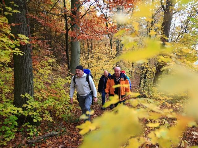Wanderer gehen durch einen bunt verfärbten Laubwald.