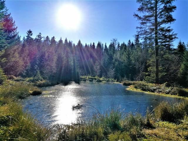 Blick über Naturweiher zu einem Tannenwald. Darüber blauer Himmel mit Sonne.