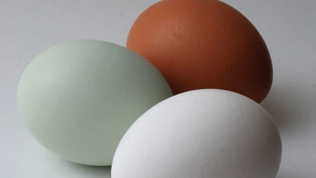 Ein Araucana-Ei im Vergleich zu normalen Eiern