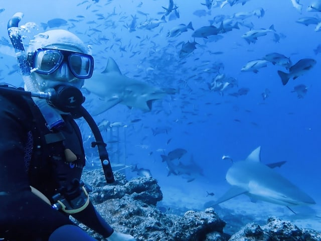 Taucher (links) mit mehreren Haien rechts.