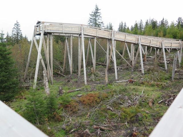 Holzsteg über Wald