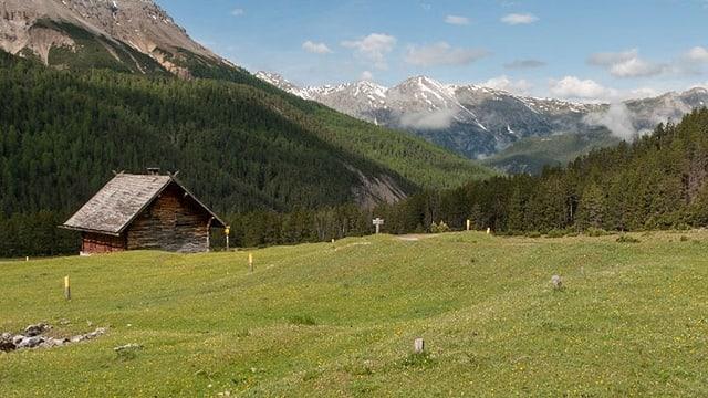 Weide mit Hütte, im Hintergrund die Alpen