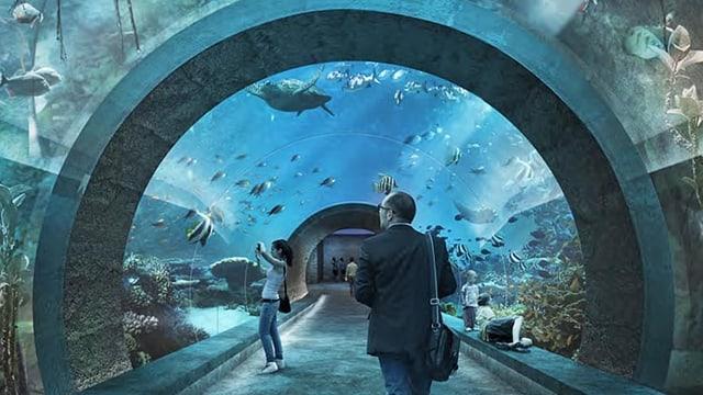 Im geplanten Ozeanium spazieren die Besucher durch einen Tunnel mitten durch das Aquarium.