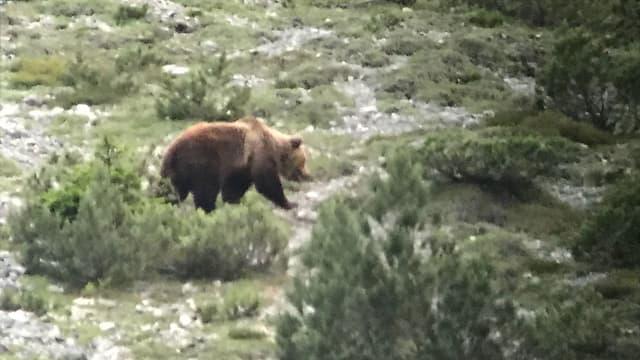 Il urs observà in Val d'Uina ils 7 fanadur 2018