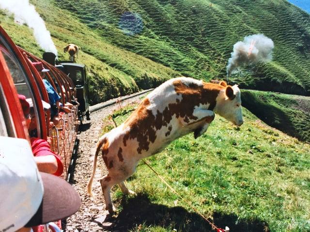 Kuh mit Dampf auf dem Kopf