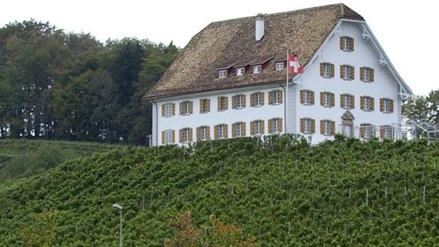 Rebberg in Freienbach.