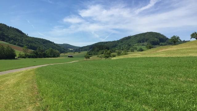 Feld, Wiesen und Wald.