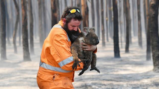 Der Wildtierretter Simon Adamczyk mit einem geretteten Koala