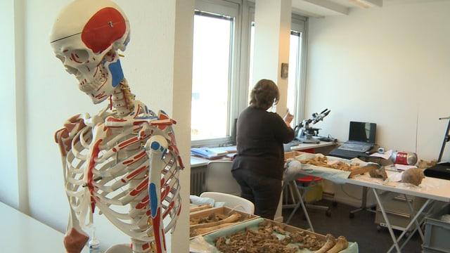 Im Vordergrund der Oberteil eines Skeletts, rechts eine Frau die mit Knochen arbeitet.