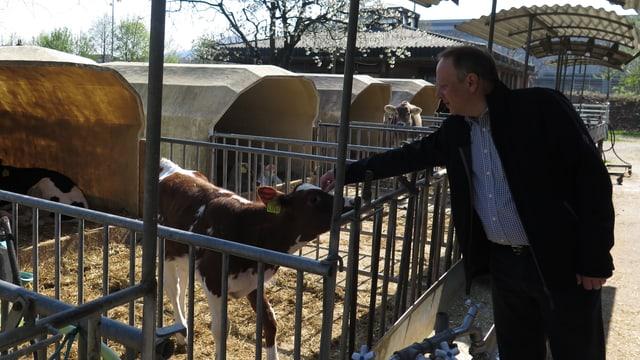 Mann streichelt Kuh