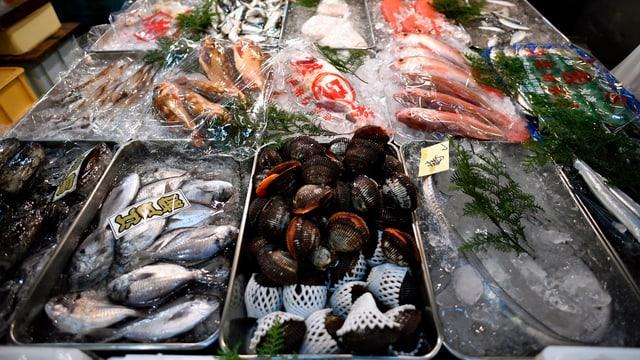 Auslage mit Fisch und Muscheln am Tsukiji-Markt