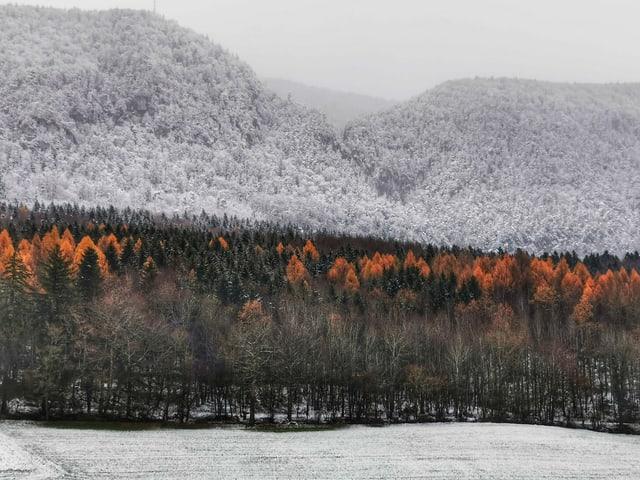 Blick auf einen Wald. Der obere Teil ist im Schnee, der untere Teil leuchtet goldig.