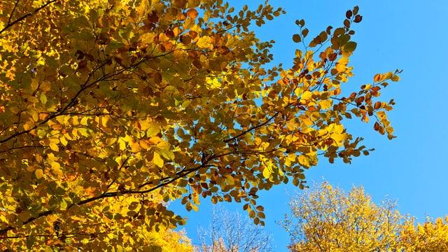 Herbstwald in der Schweiz