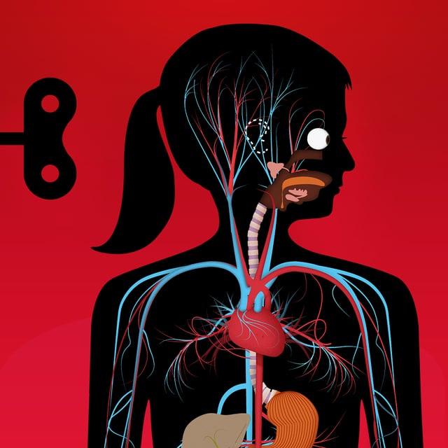 Körper kennen lernen