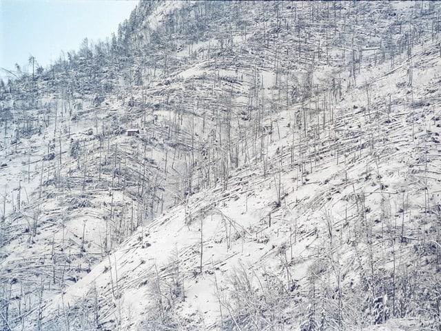 Sturmschaeden des Orkans Lothar in Grafenort im Kanton Nidwalden, aufgenommen am 29. Dezember 1999.