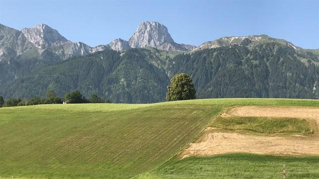 Blick über gemähte Wiesen zum wolkenlosen Stockhorn