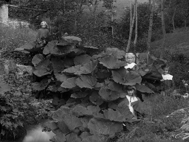 Vier Mädchen, verborgen in einem Blätterwald.