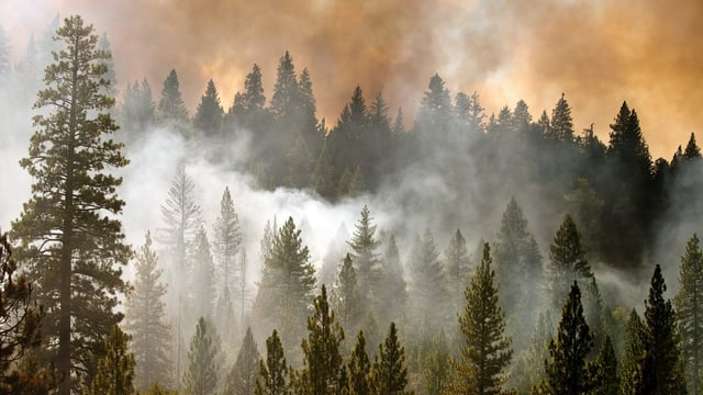 Dichter Rauch steigt aus einem Nadelwald empor, im Hintergrund lodert Feuer.