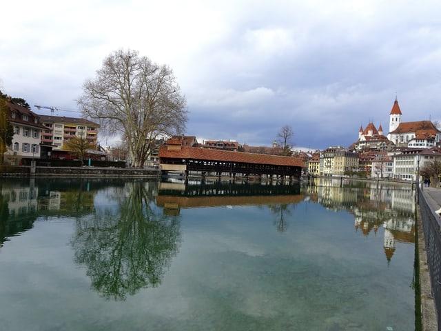 Aare mit alter Holzbrücke und Baum der sich spiegelt in der Altstadt von Thun.