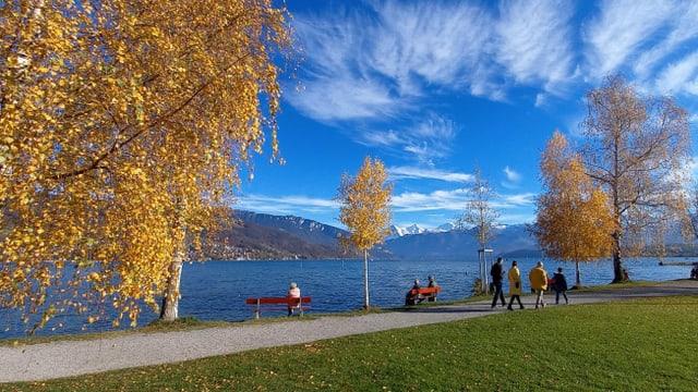 Man nehme Schleierwolken, blauer Himmel, blaues Wasser und ein Schuss Okerfarbe und fertig ist dass goldene Herbstfoto.