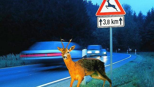 Unfall mit Wild