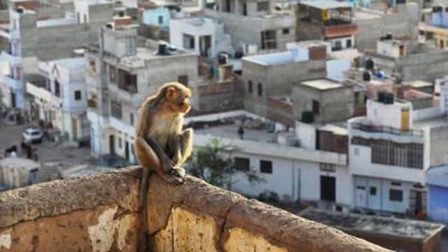Welt des Menschen: Stadt – Dschungel aus eigener Hand (1/2)