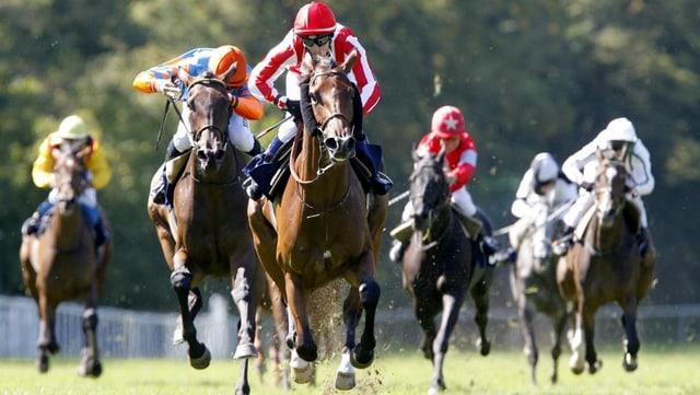 Pferderennen im Schachen im Jahr 2009