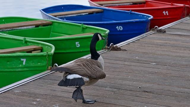 Bootssteg mit einer Ente
