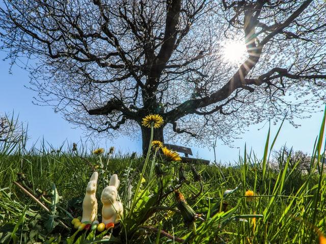 Schoggihasen vor Baum