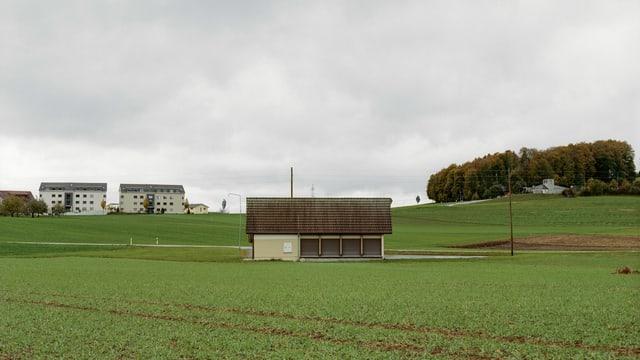 Grünes Feld, im Hintergrund zwei Wohnblocks.