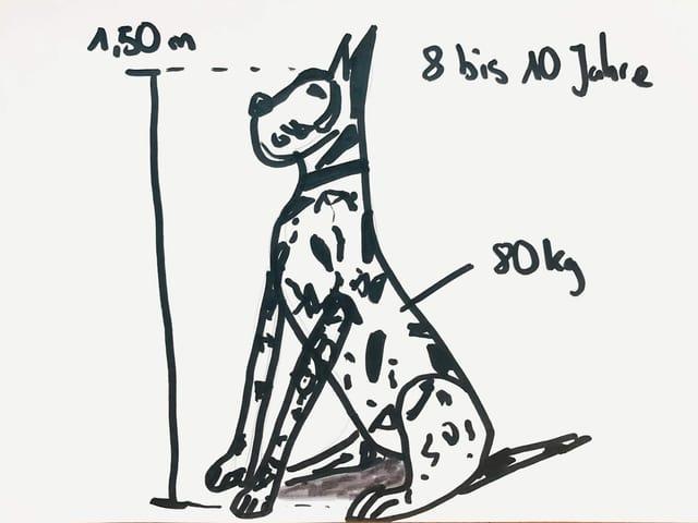 Zeichnung von Dogge Apollo