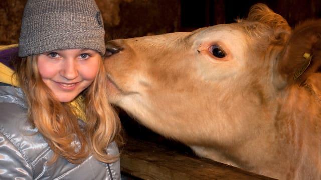 Eine Kuh leckt einem Mädchen das Ohr ab.