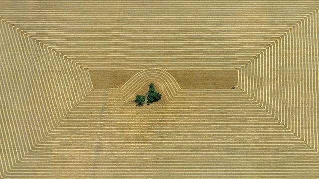 Der Bild «Erntemuster aus der Pampa» aus dem Jahre 1967