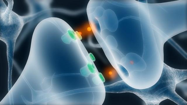 Synapse sendet Botenstoffe an die Rezeptoren einer anderen Zelle