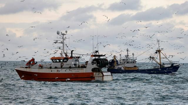 Französische Fischerboote in der Nordsee mit vielen Möwen.
