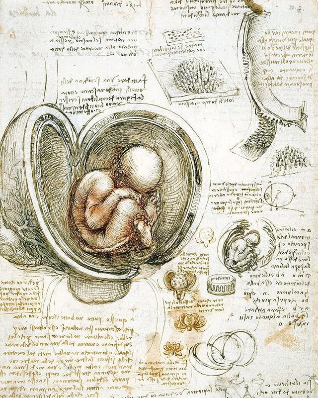 Skizzen von da Vinci: Unter anderem ein Fötus im Mutterleib