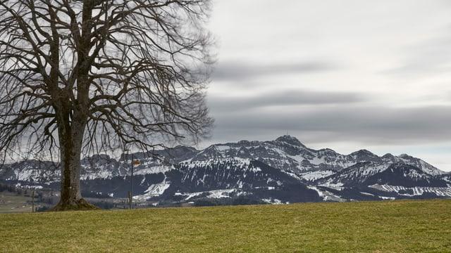 Dichte Wolken ziehen über das Alpsteinmassiv hinweg.